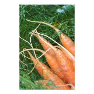 carrots in the basket stationery