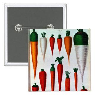 Carrots Pins