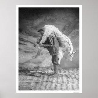 Carrying Goat Alaska 1905 Print