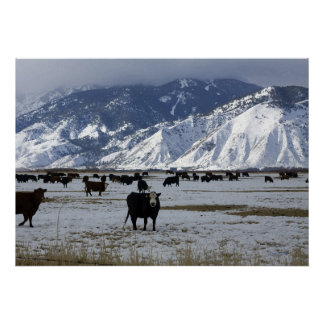 Carson Valley Poster