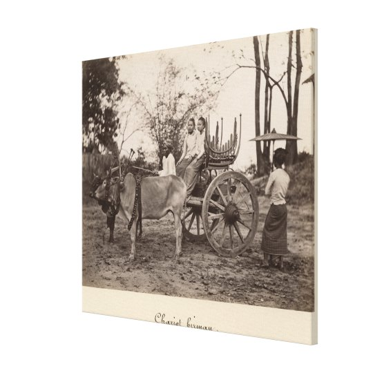 Cart pulled by two oxen at Mandalay, Burma Canvas Print