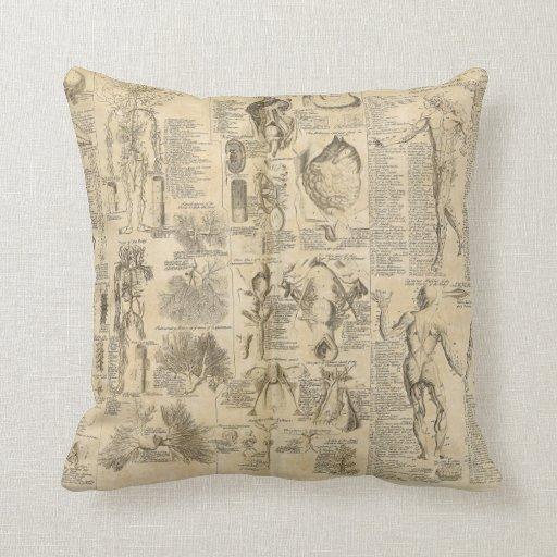 Carta anatómica de Cyclopaedia 1728 Almohada