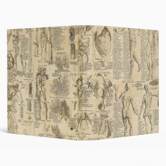 "Carta anatómica de Cyclopaedia 1728 Carpeta 1"""