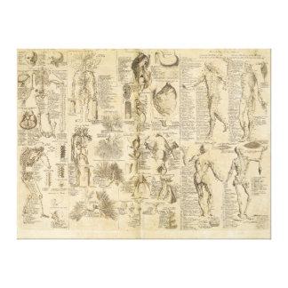 Carta anatómica de Cyclopaedia 1728 Lienzo Envuelto Para Galerías