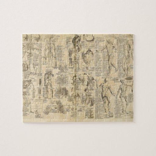 Carta anatómica de Cyclopaedia 1728 Rompecabeza