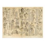 Carta anatómica de Cyclopaedia 1728 Tarjeta Postal