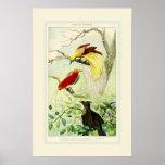 Carta antigua hermosa del pájaro de las aves del posters