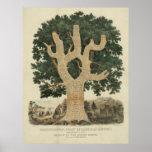 Carta cronológica de la historia americana [1881] póster