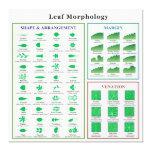 Carta de la morfología de la hoja impresión en lona estirada