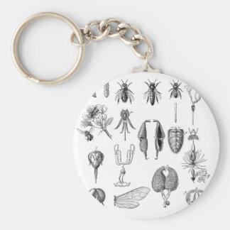 Carta de las piezas del insecto llavero redondo tipo pin