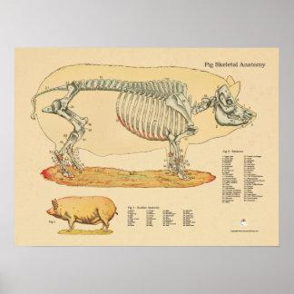 Carta esquelética veterinaria de la anatomía del póster