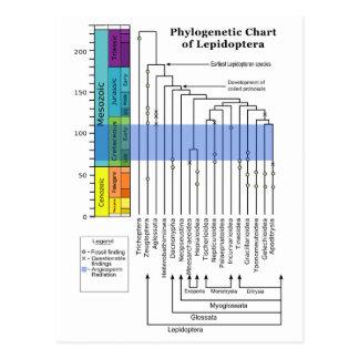 Carta filogenética de lepidópteros postal