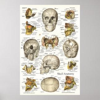 Carta humana 24 x 36 de la anatomía del cráneo poster