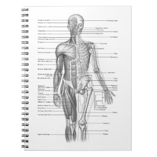 Carta humana de la anatomía libreta