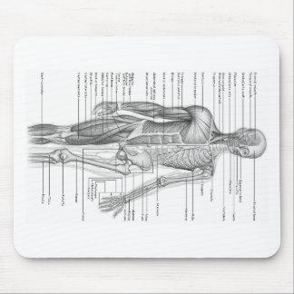 Carta humana de la anatomía mousepad