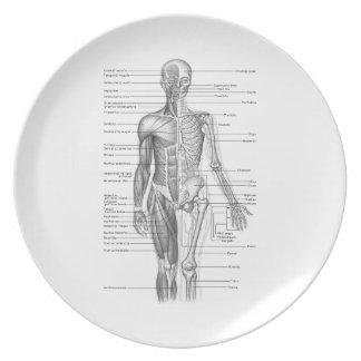 Carta humana de la anatomía platos para fiestas