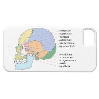 Carta humana del nombre del hueso del cráneo iPhone 5 cárcasas