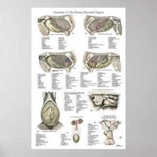Carta interna del poster de la anatomía del