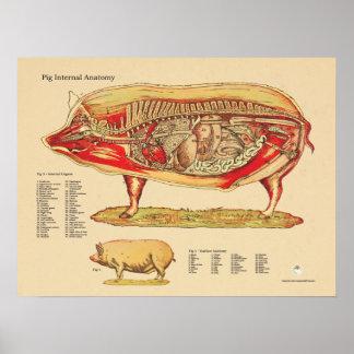 Carta interna veterinaria de la anatomía del cerdo póster