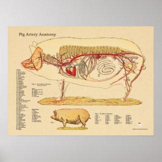 Carta veterinaria de la anatomía de la arteria del póster