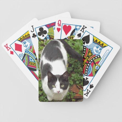 Cartas De Juego Gatos