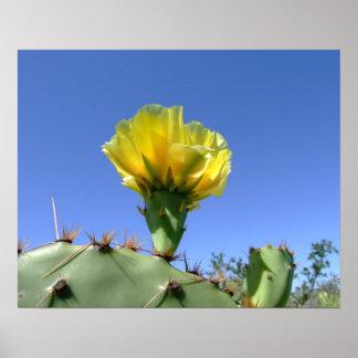 Cartel amarillo de la flor del cactus del higo chu póster