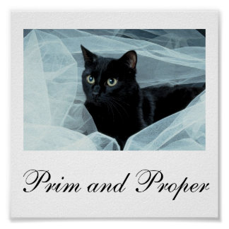 Cartera del gato negro hasta 11x11 póster