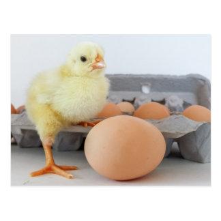 Cartón del polluelo y del huevo con el huevo de postales