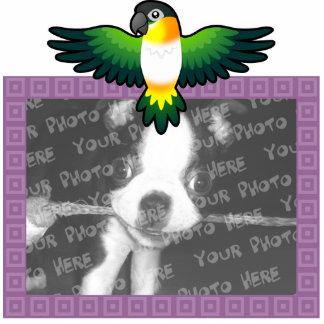 Cartoon Caique / Lovebird / Pionus / Parrot Cutout