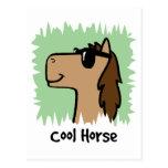 Cartoon Clip Art Cool Horse Wearing Sunglasses Postcard
