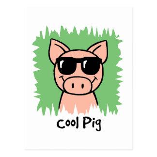 Cartoon Clip Art Cool Pig with Sunglasses Postcard