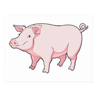 Cartoon Pig Postcard