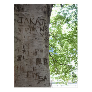 Carved in a Tree Central Park Nature Photography Postcard
