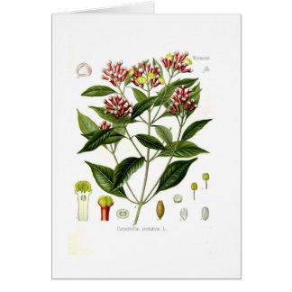 Caryophyllus aromaticus (Clove) Cards