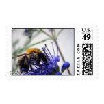Caryopteris Postage Stamp