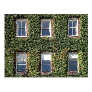 Casa de ciudad de Dublín Windows e hiedra que sube Postal