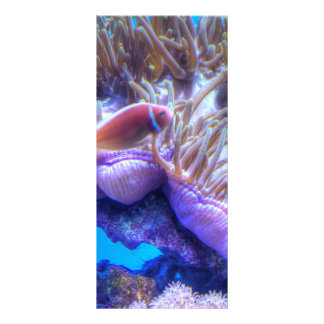 Casa del coral de los pescados lona publicitaria