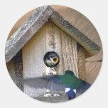 Casa del pájaro etiqueta redonda