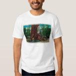 Casa en el árbol famosa, parque de la secoya de playera