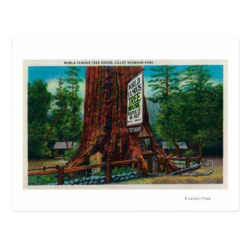 Casa en el árbol famosa, parque de la secoya de postal