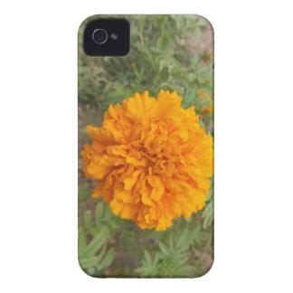 Casamata anaranjada del iPhone 4 del clavel Funda Para iPhone 4