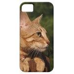 Casamata Barely There del iPhone 5 del gato de la  iPhone 5 Case-Mate Protector