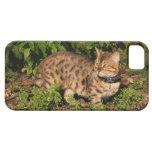Casamata Barely There del iPhone 5 del gato de la  iPhone 5 Protector