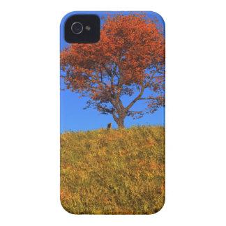 Casamata clara del iPhone 4 del día del otoño iPhone 4 Case-Mate Cárcasa