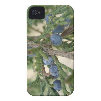 Casamata del iPhone 4 de la baya de enebro Case-Mate iPhone 4 Protector
