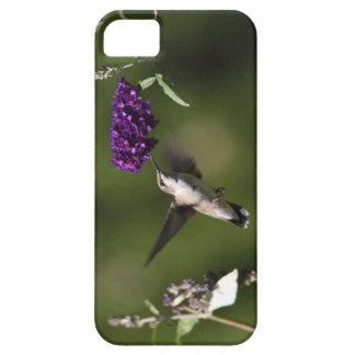 Casamata hermosa de Iphone 5 del colibrí iPhone 5 Carcasa