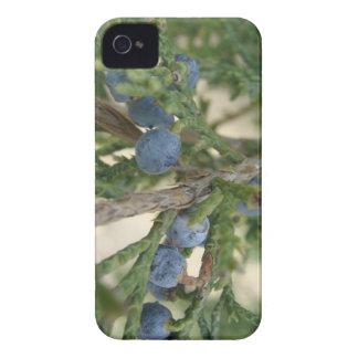 Casamata intrépida de Blackberry de la baya de iPhone 4 Carcasas