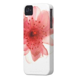 Casamata rosada apenas There™ del iPhone 4/4S del iPhone 4 Coberturas