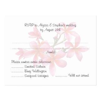 Casando el Plumeria rosado de las postales del