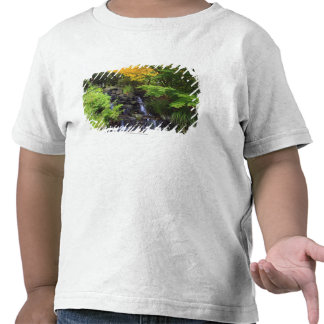 Cascada borrosa de la roca árboles verdes y anara camiseta